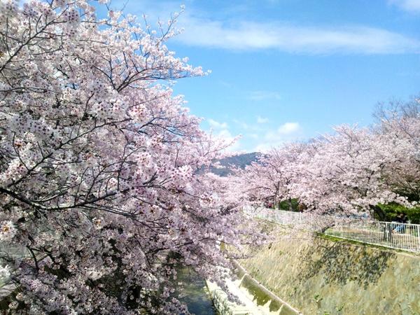 妙法寺川から見た高取山