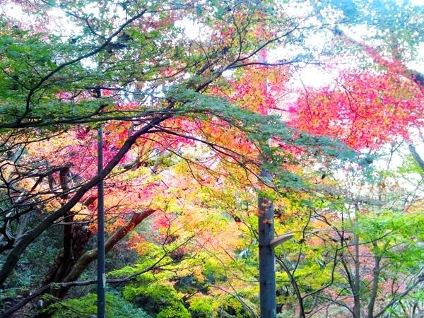 中の茶屋の下の紅葉