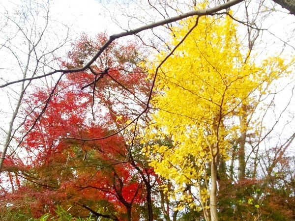 中の茶屋の近くの紅葉