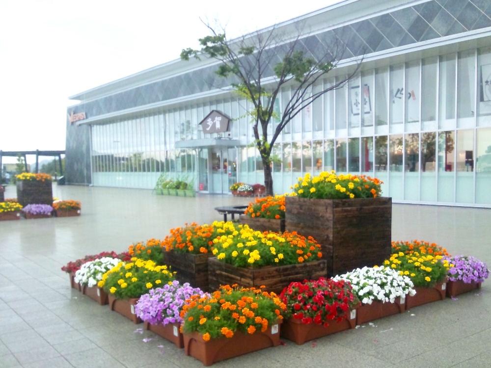 多賀サービスエリアの南側の花