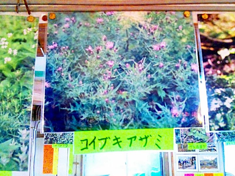 売店に飾られた高山植物の写真