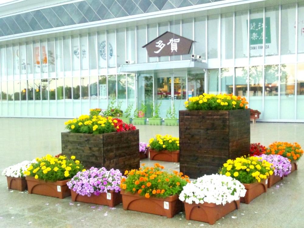多賀サービスエリアの北側の花