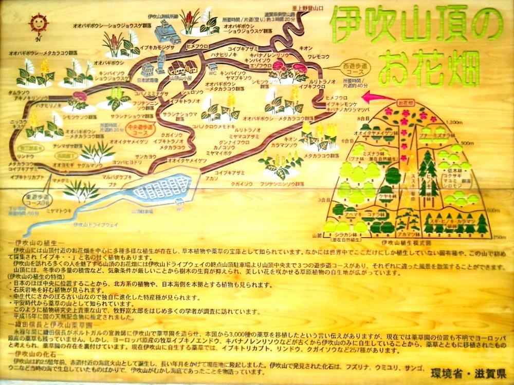 伊吹山頂のお花畑案内図