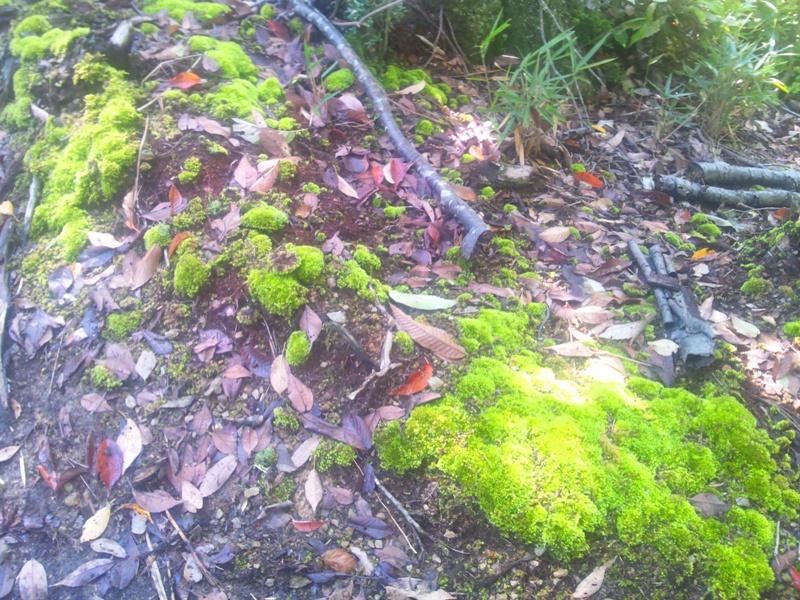 登山道の緑苔