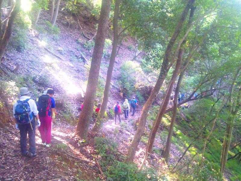 林の小道を進む