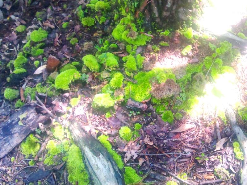 涼しげな緑苔