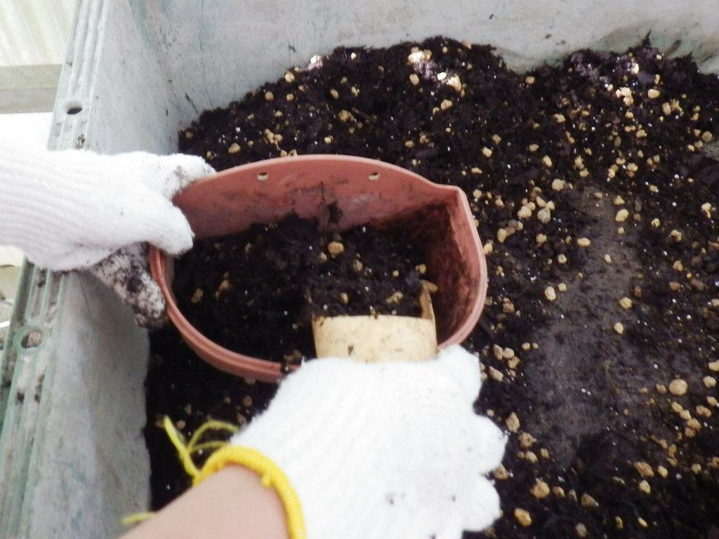 06b 鉢に培養土を盛る
