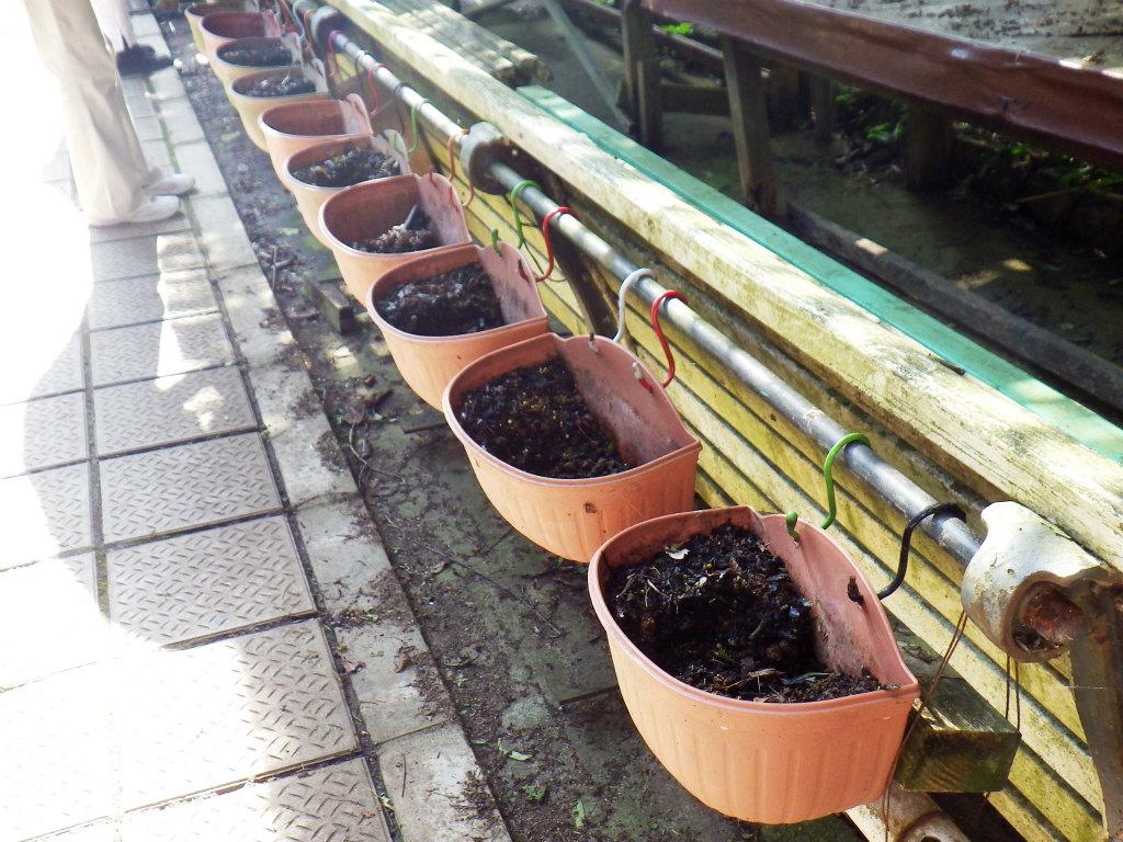 01a 月見茶屋前の花鉢