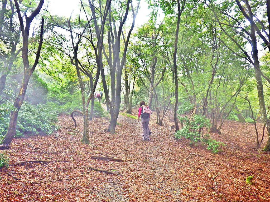 12b 落ち葉の登山道を進む