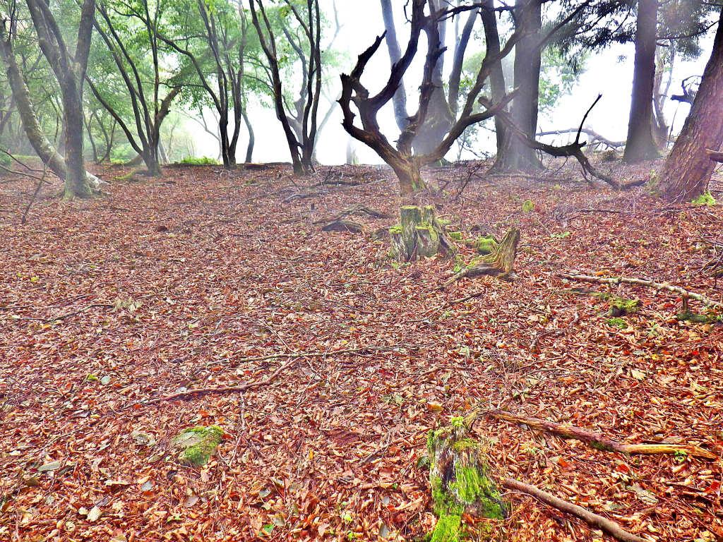 12a 落ち葉の登山道