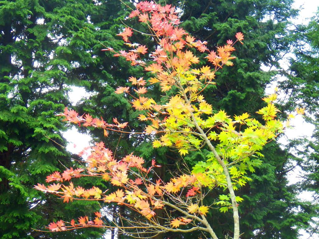 21b 遊歩道の紅葉