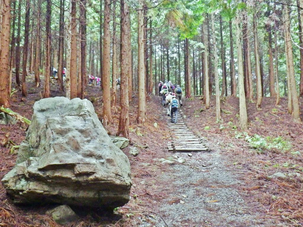 09a 林の道を進む