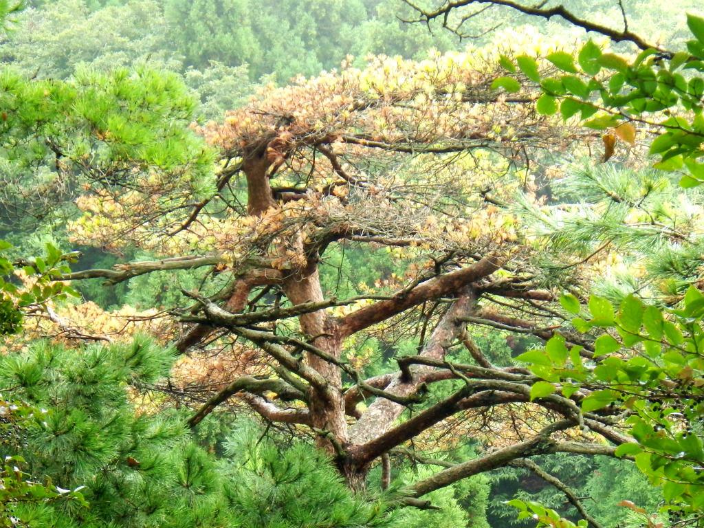 11a 色づく樹木