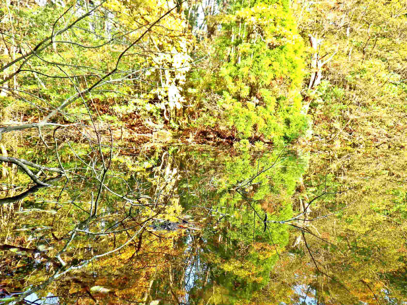 21a ノタノホリ水面の紅葉