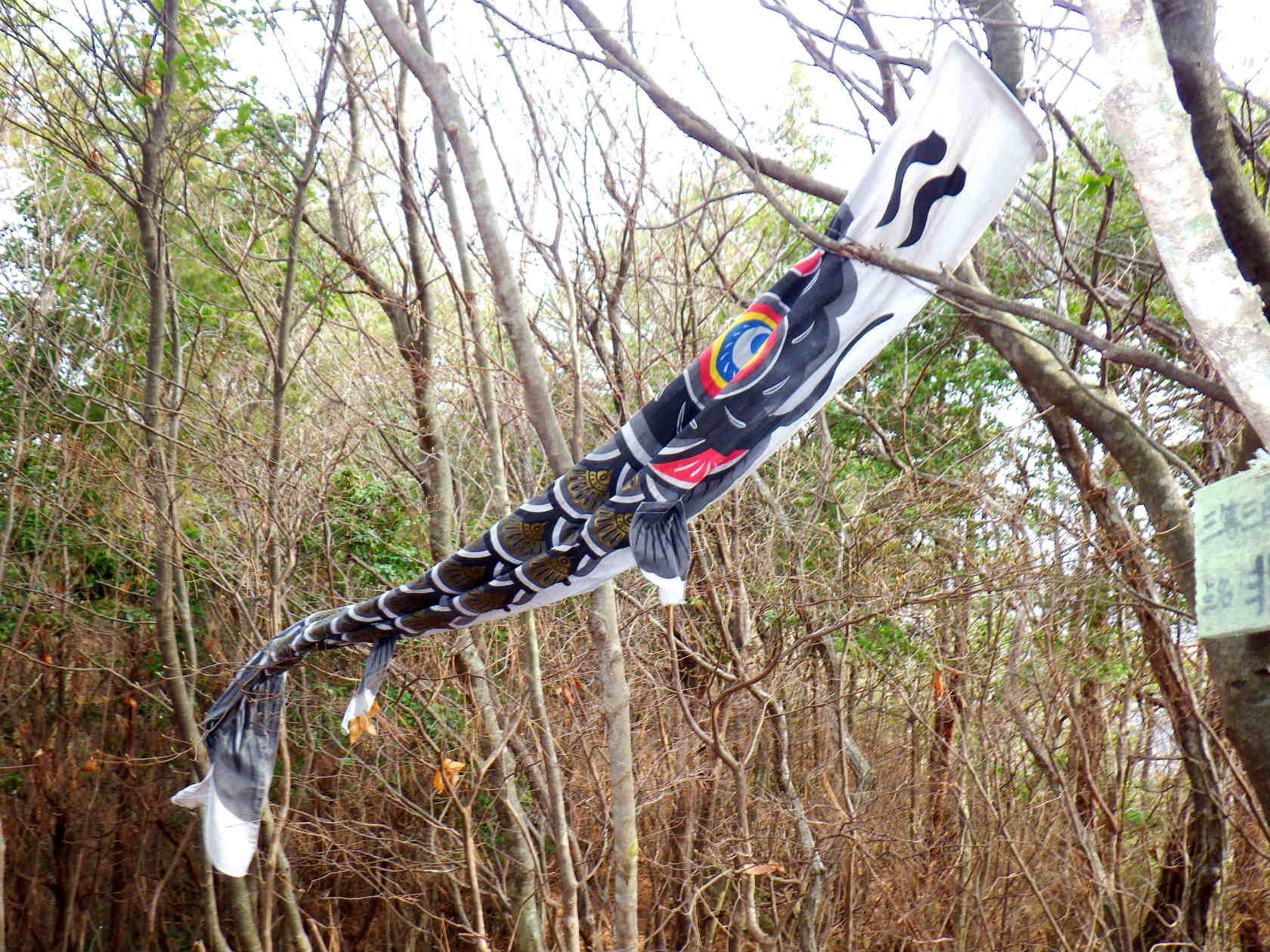 17b 山頂の鯉のぼり