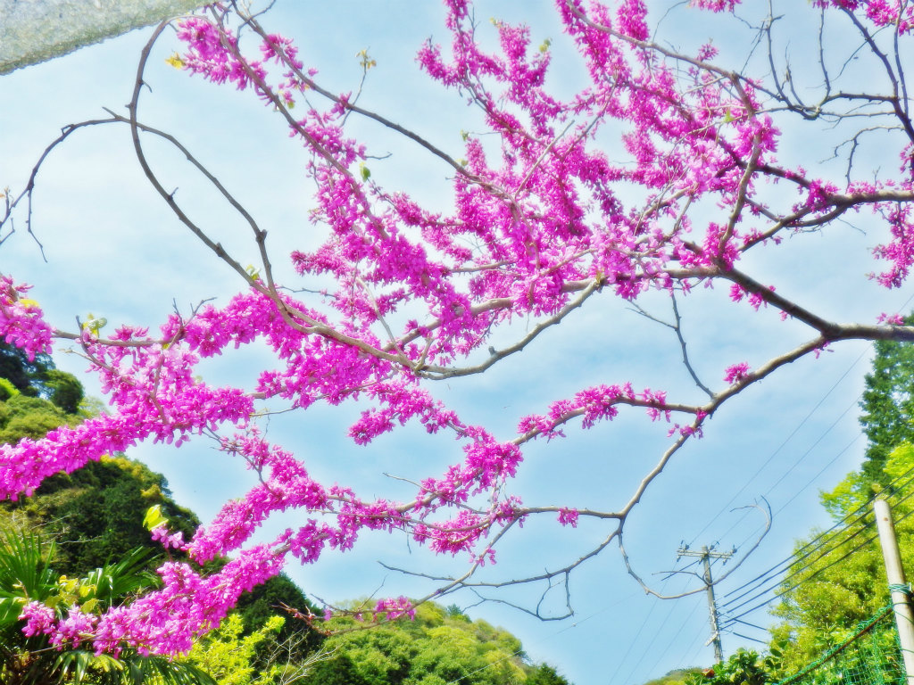 30b 桜茶屋近くの花木