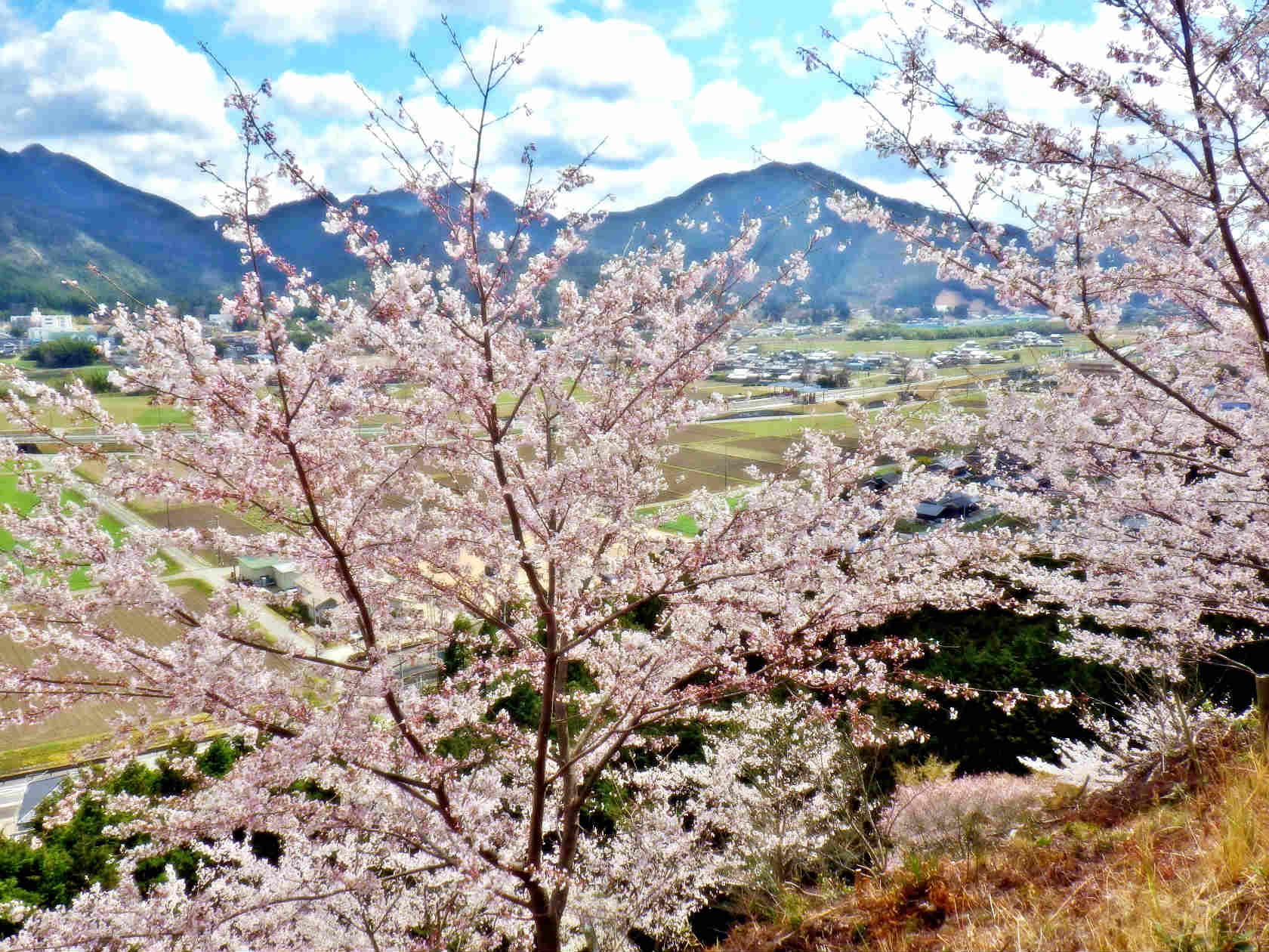 23b 桜の丘の上からの眺め