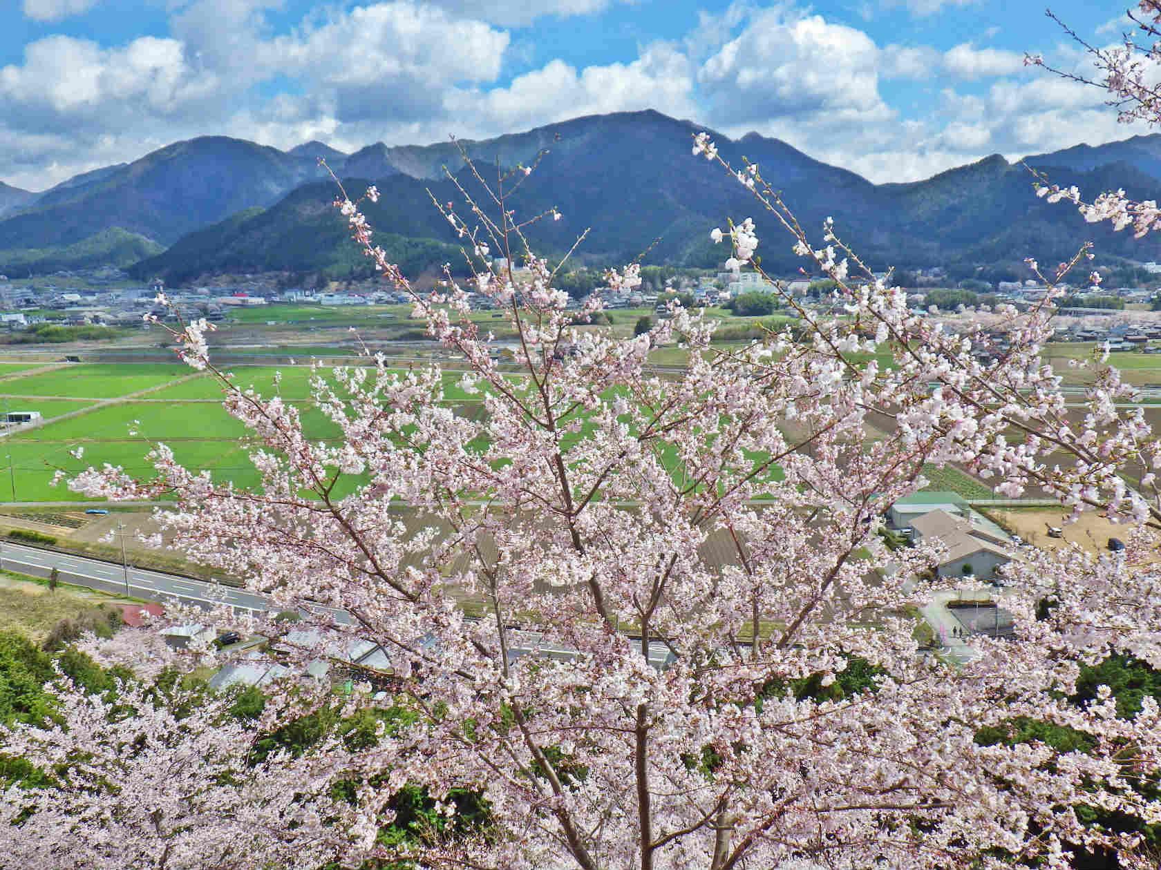 23a 桜の丘の上からの眺め
