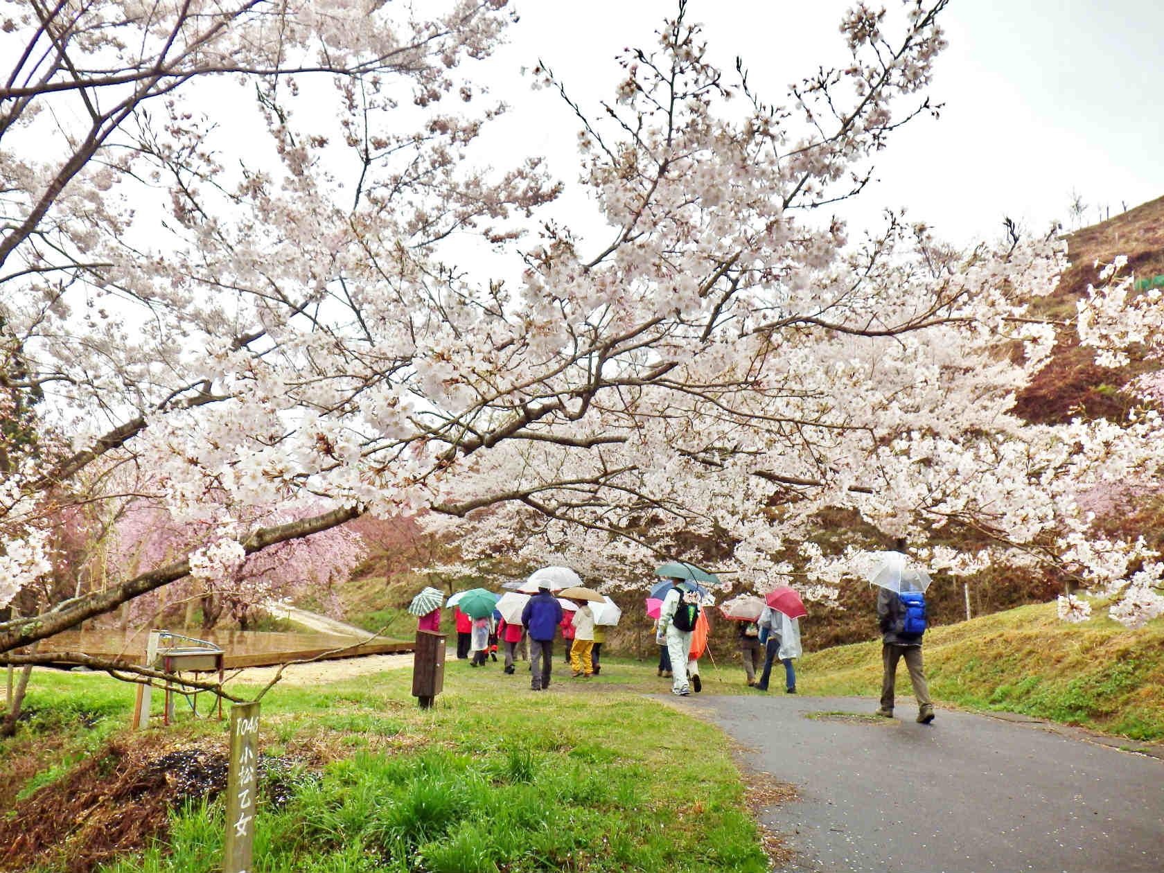 03a 桜華園の中を進む