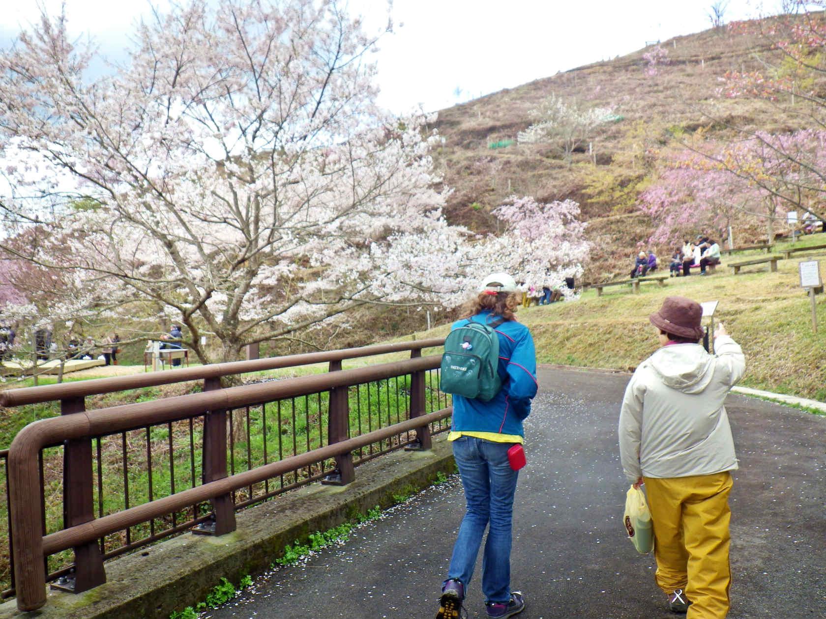 18b 桜華園入口の橋