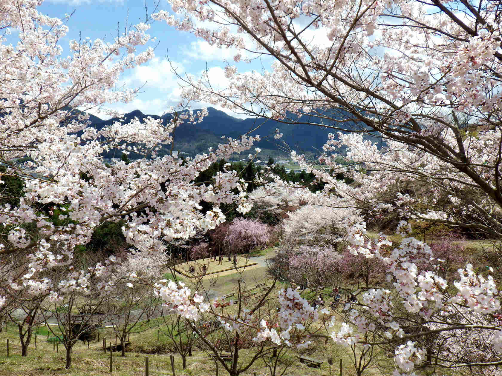 22a 桜越しに見える山々