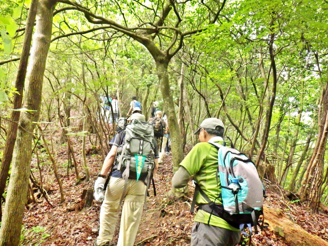 10b 杉・檜の林が続く