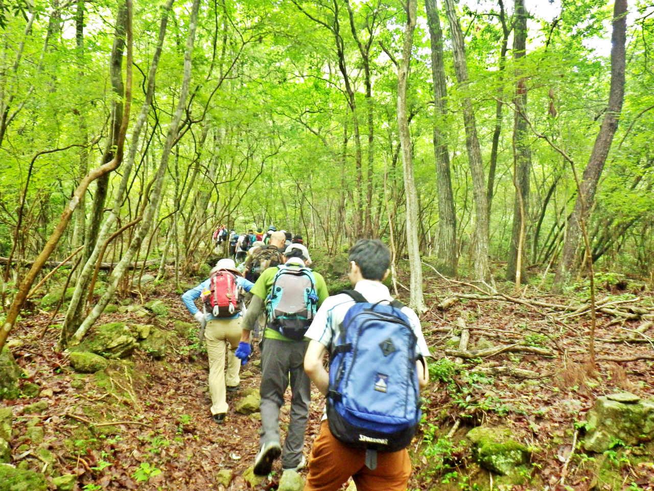 09b 杉・檜の林を登る