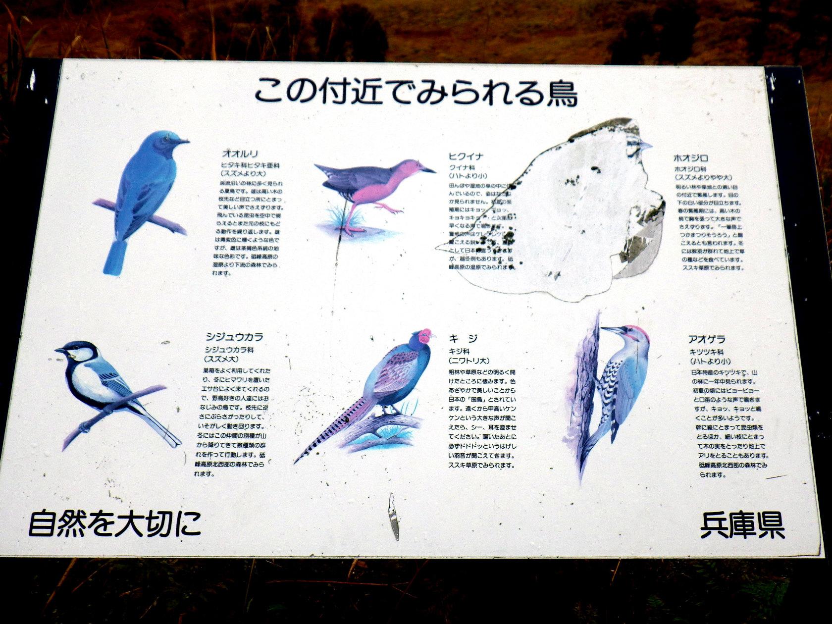 15b 高原周辺に住む野鳥