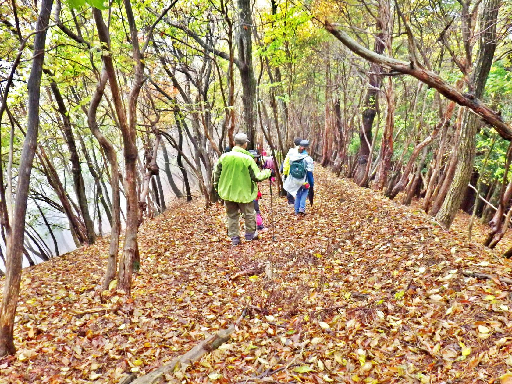 08b 落ち葉の道を下山