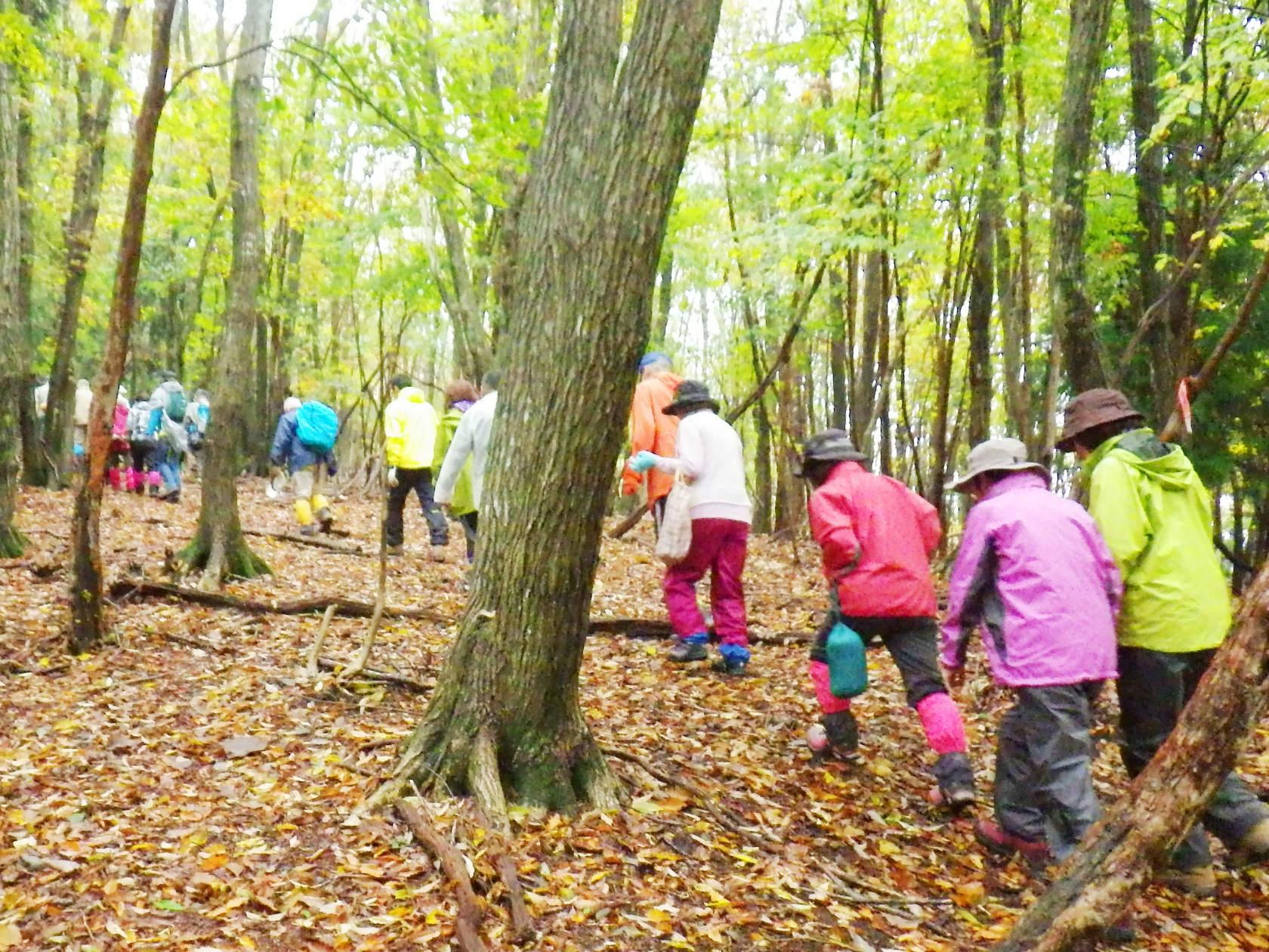 03a 落ち葉の林を登る