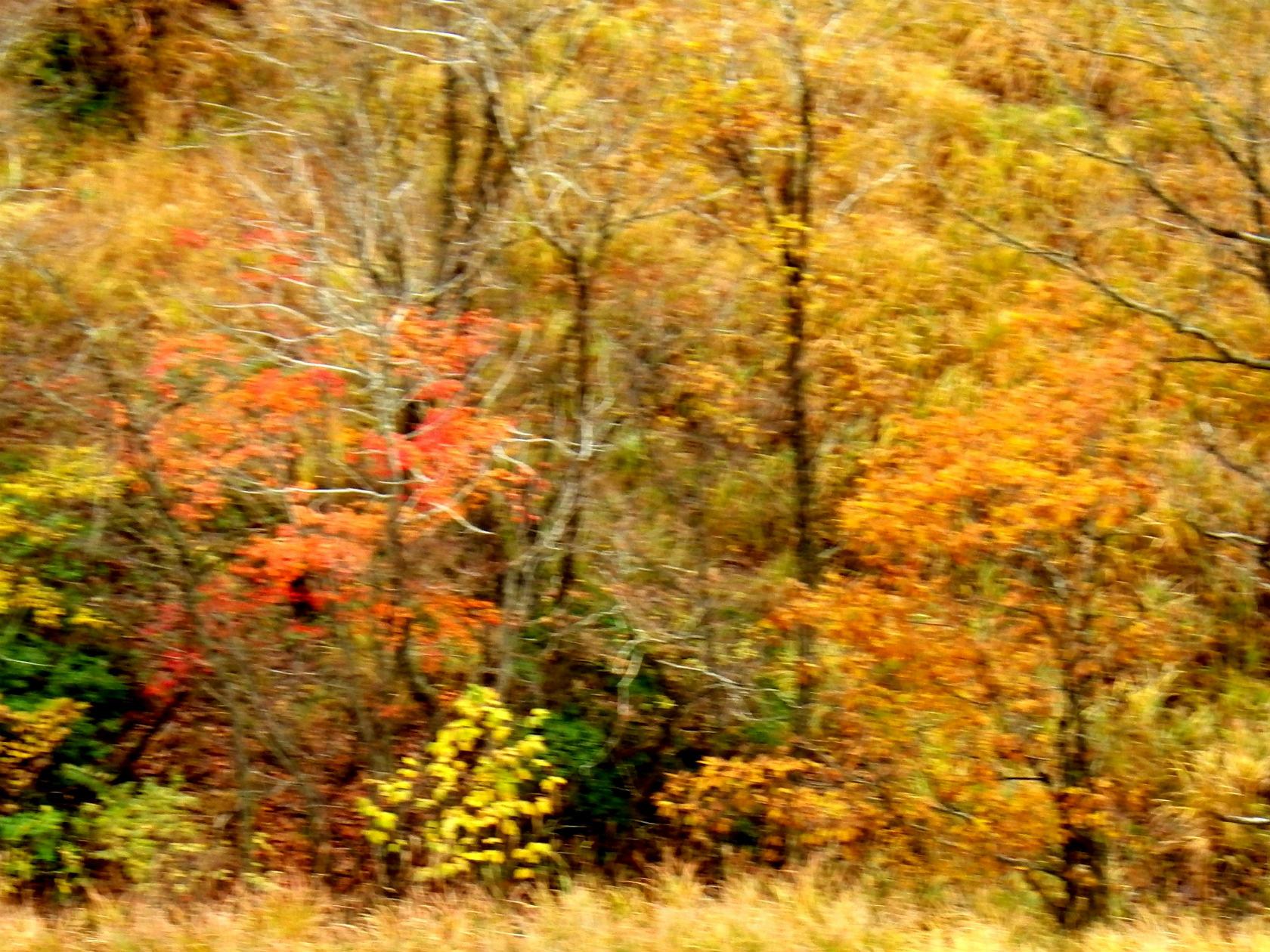 19b 高原周辺の紅葉