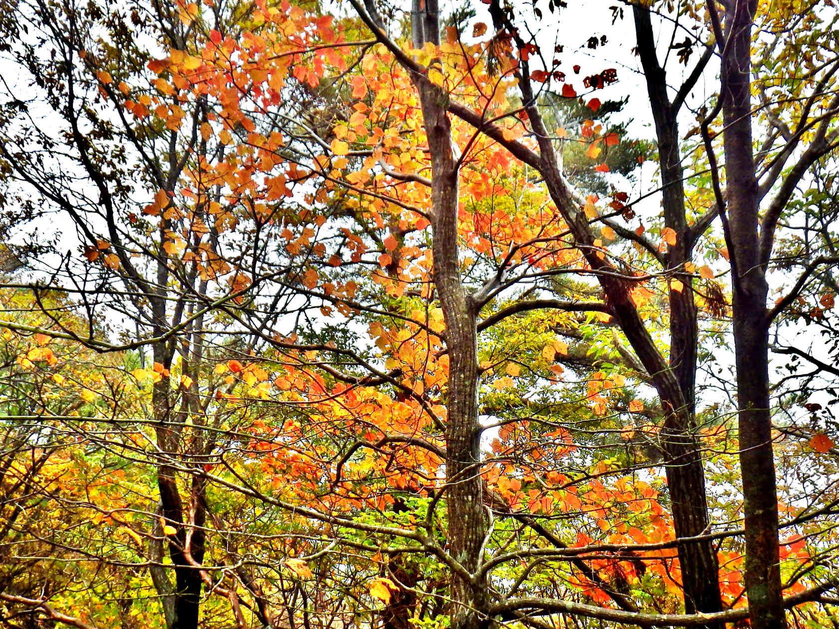 06a 山頂近くの紅葉