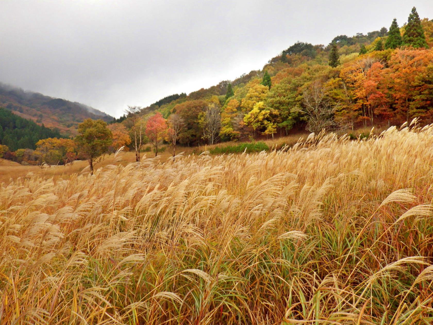 11b ススキの草原