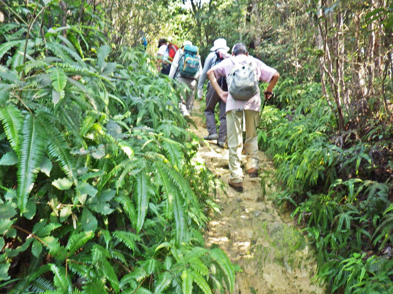 04b シダの道を登る