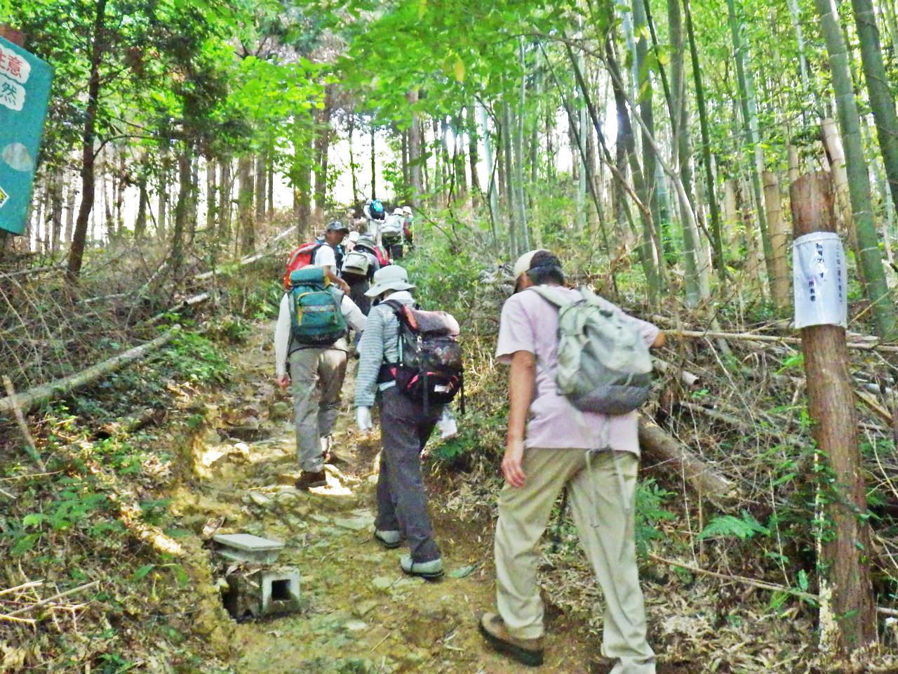 04a 林の登山道を登る