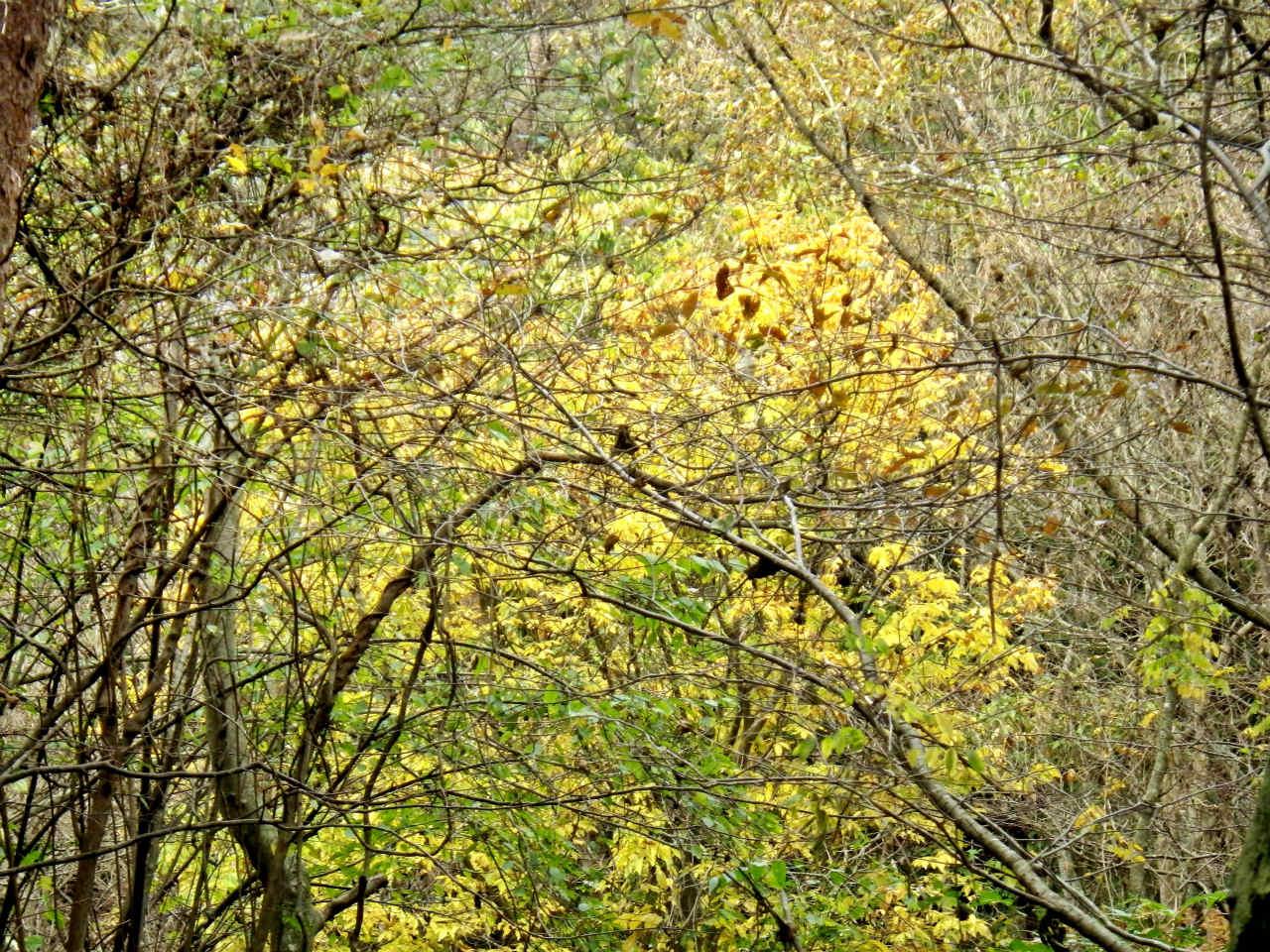 14b 古寺山近くの紅葉