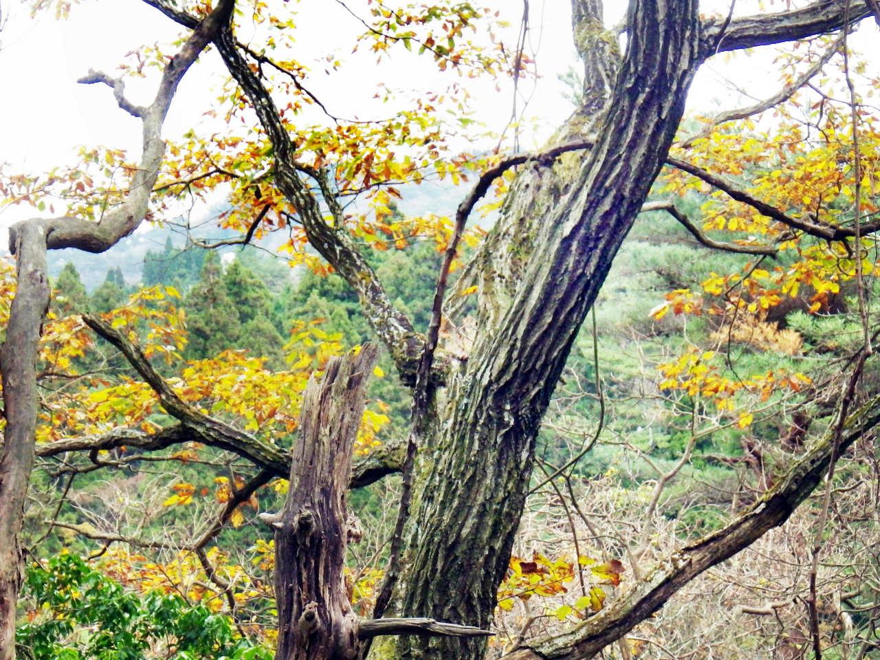 05b 自然観察路の紅葉