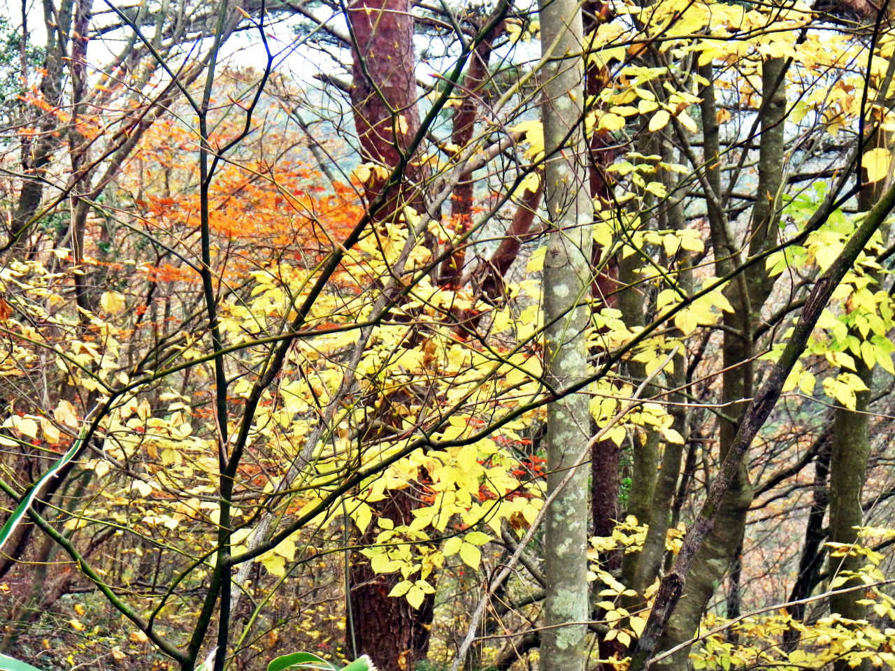 12b シュラインロードの紅葉
