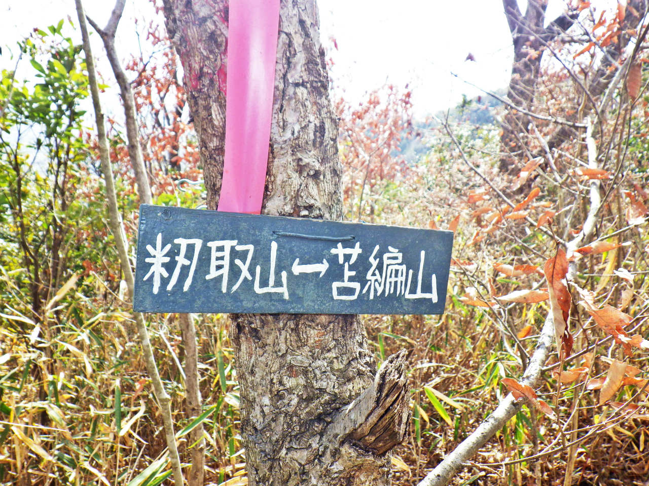 15b 苫編山への標識