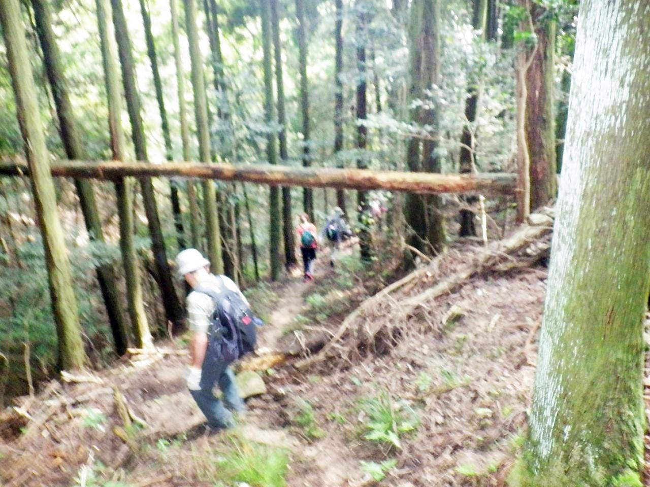 20a 木漏れ日の森へ下る