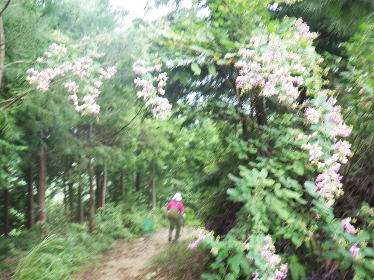 09a 萩の花