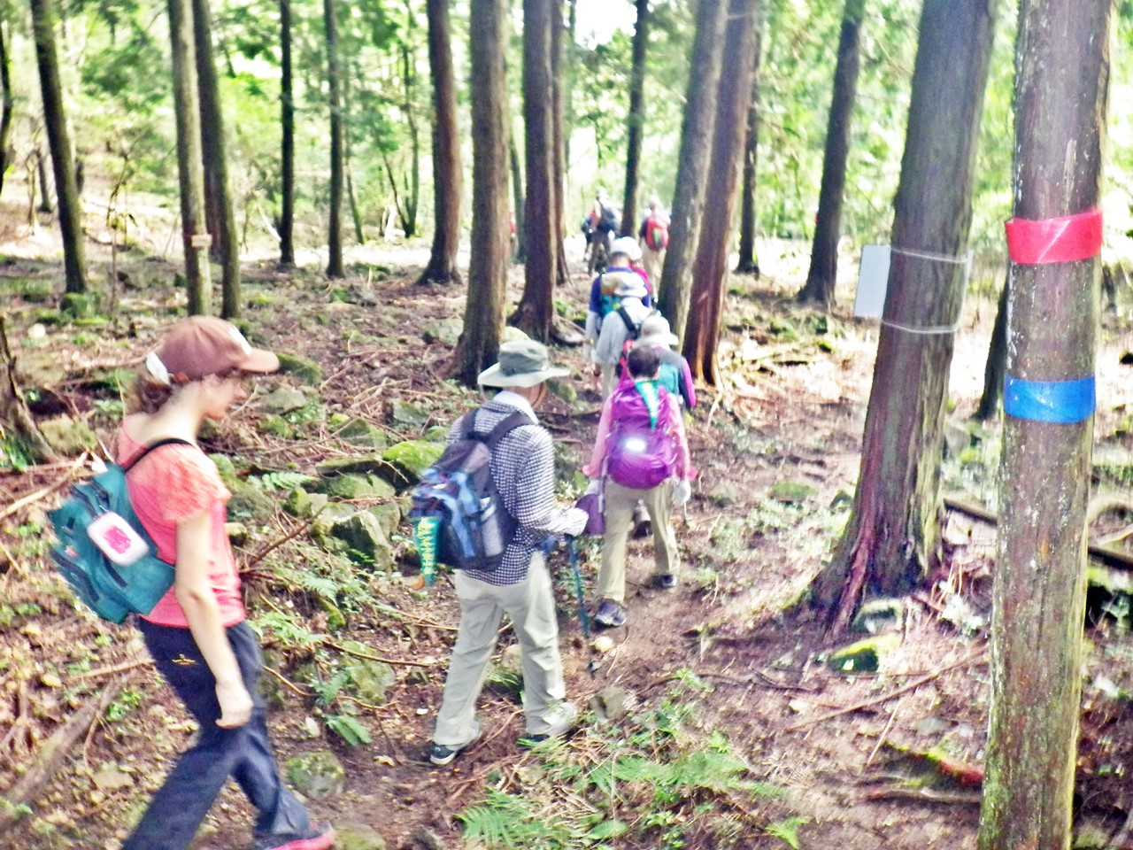 20b 木漏れ日の森を進む