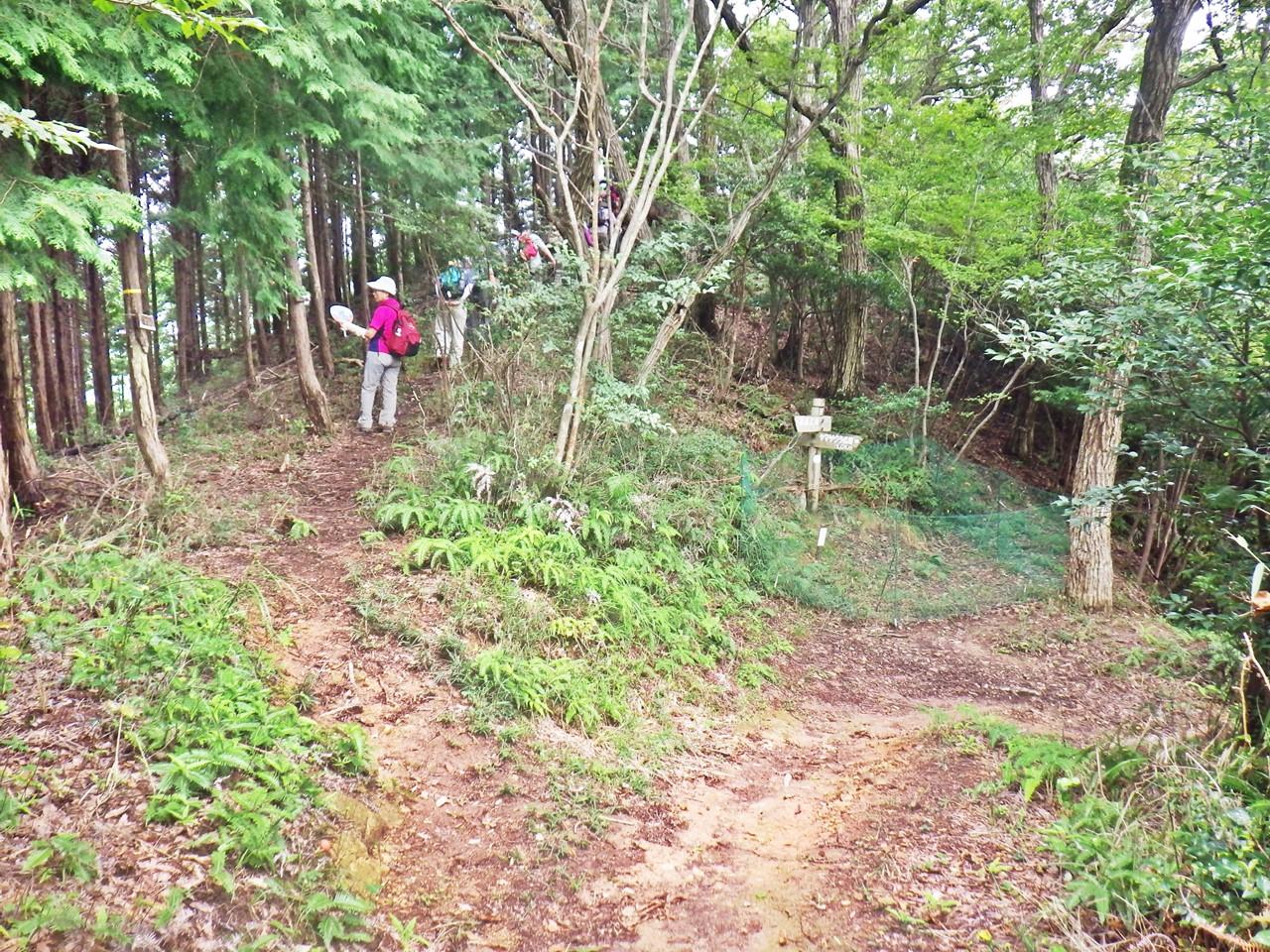 09b 木漏れ日の森への分岐