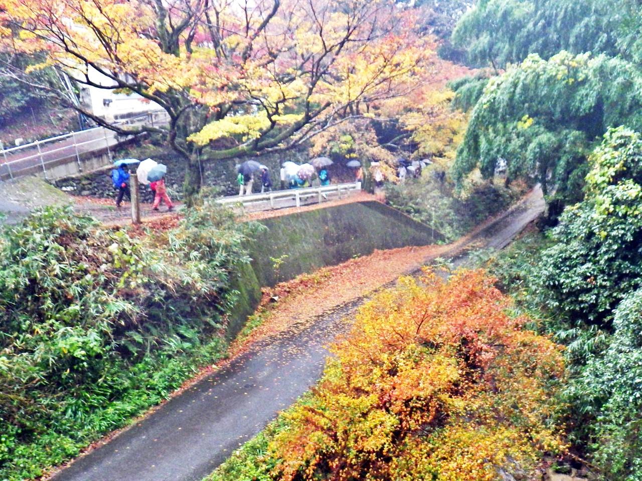 09a 坂本ケーブル駅下の紅葉