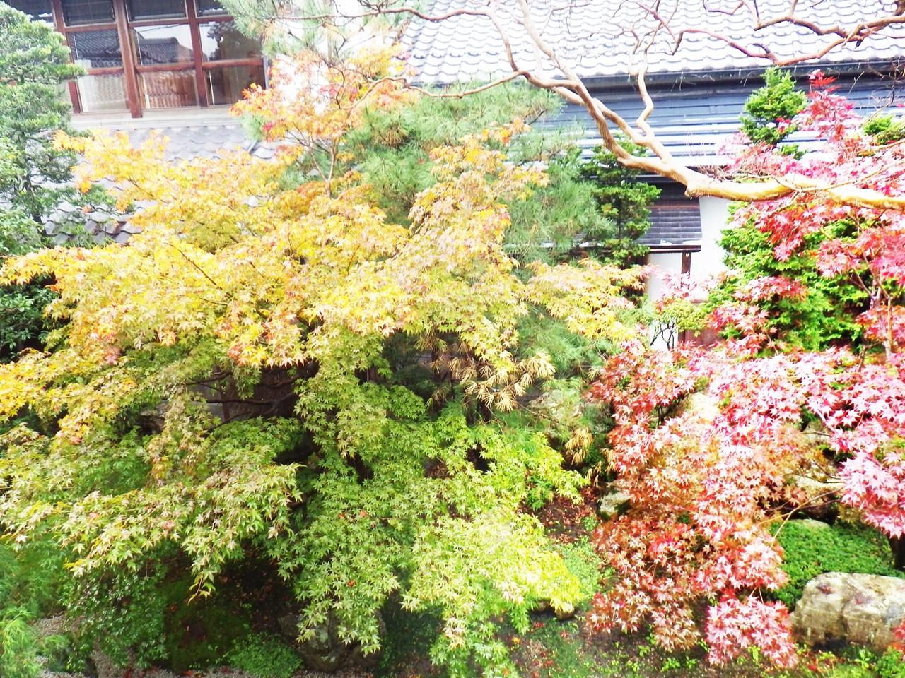 17b 鶴喜そばの庭