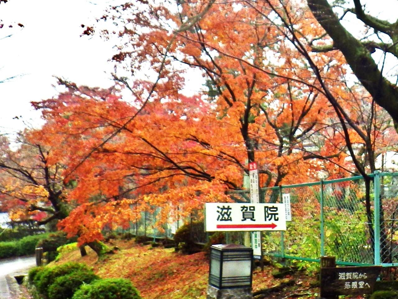 03a 滋賀院への標識