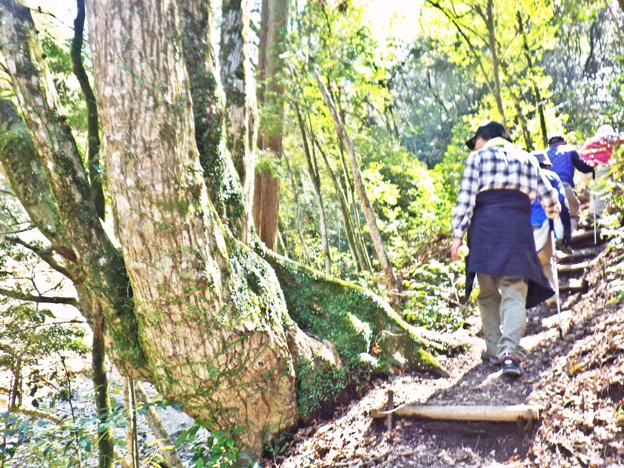 11b どんぐりの道を登る