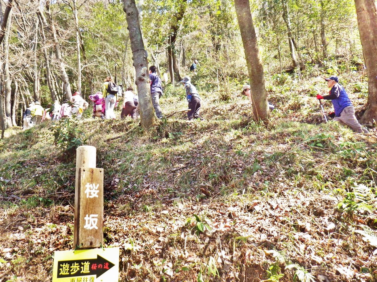 08a 桜の園の桜坂を登る