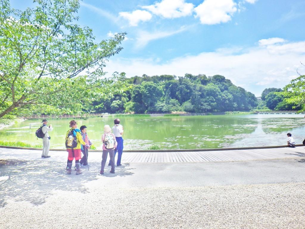 10b 橿原神宮の深田池