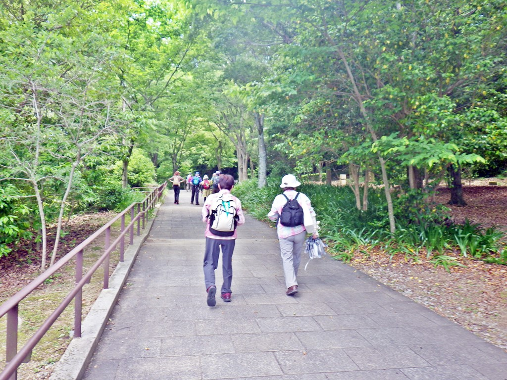 15a 甘樫丘に登る